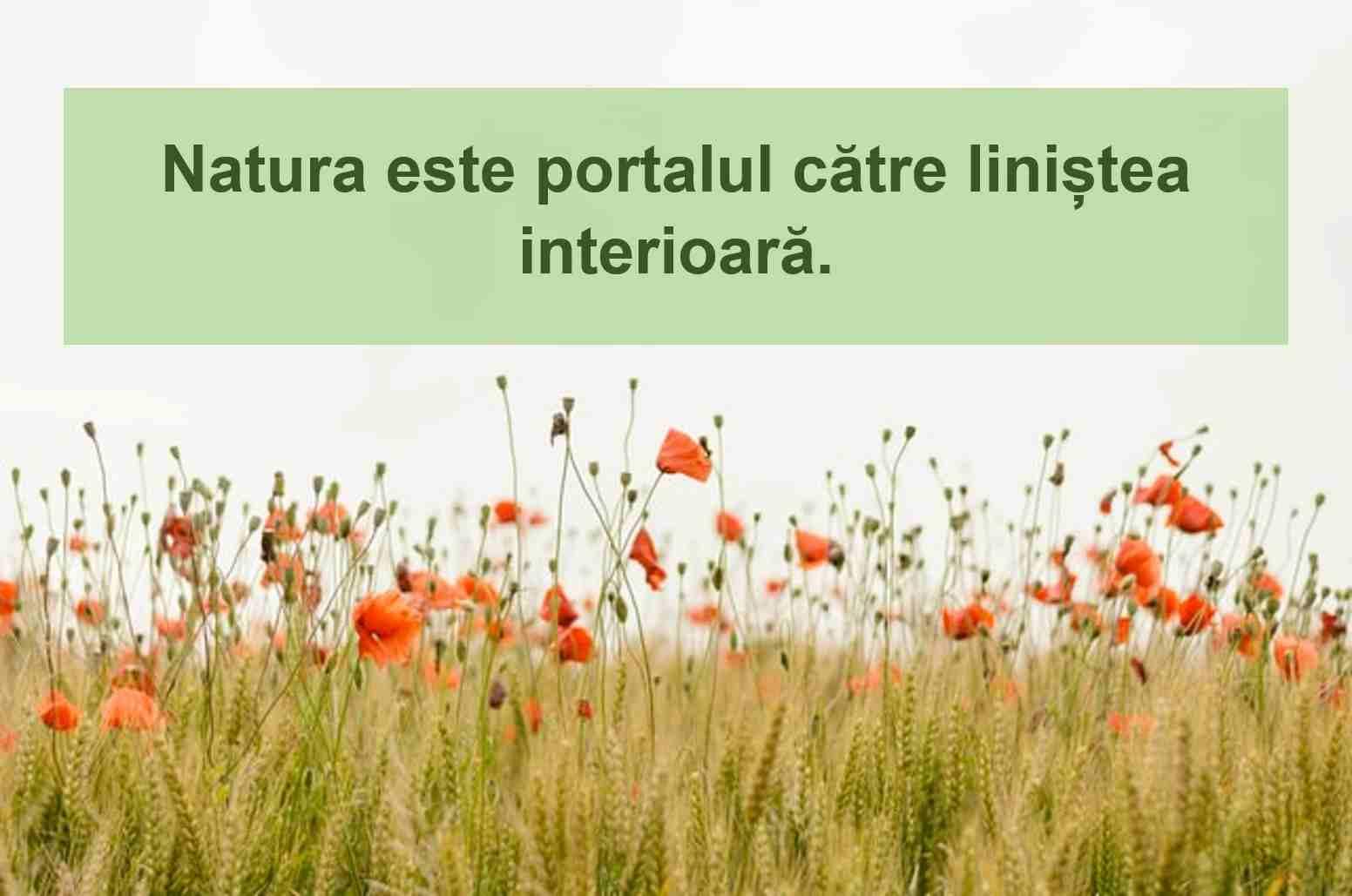 statusuri despre natura