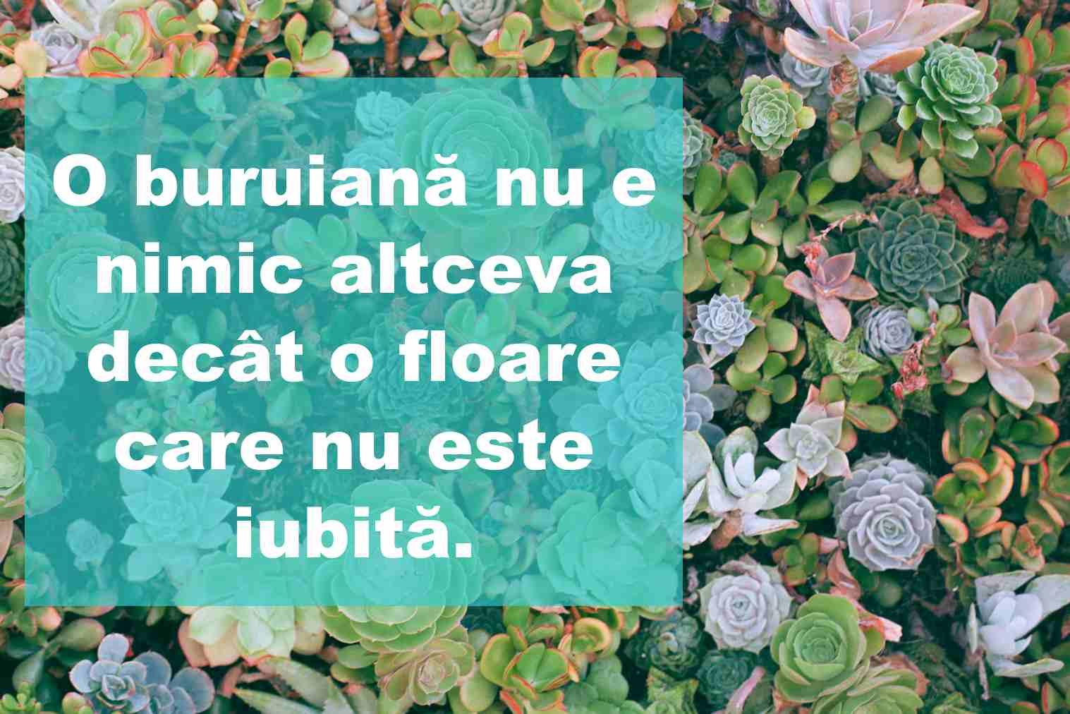 citate despre flori1
