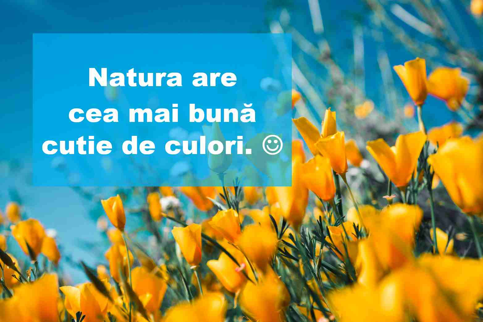 citate flori1